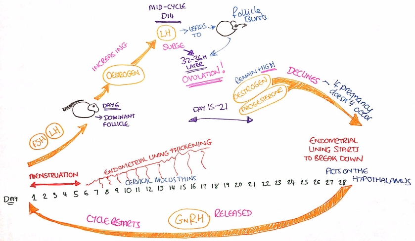 The cycle - a rough guide!